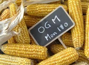 OGM-mon