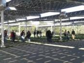 evidenza piazza fotovoltaica