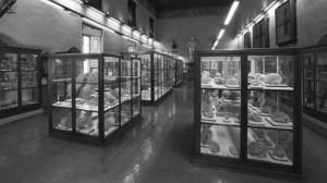 Museo Bioscienze
