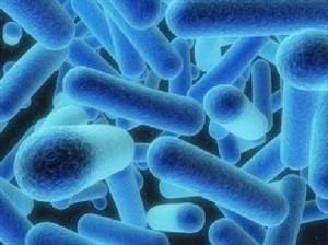Legionella_batteri