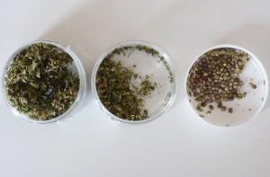 1495528853083-erba-legale-prova-cannabis-easyjoint7