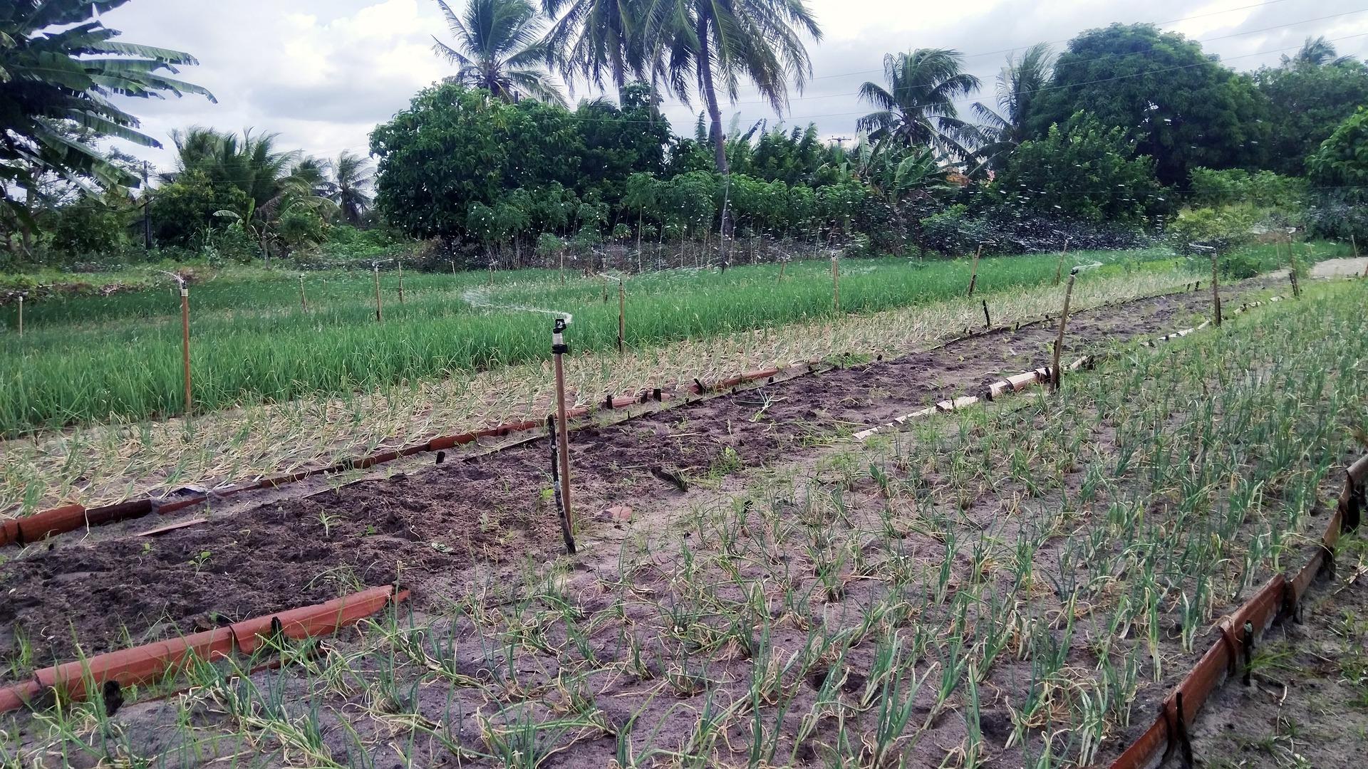 agroforestry2