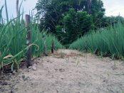 agroforestry1